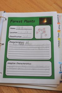 Forest plant notebooking page