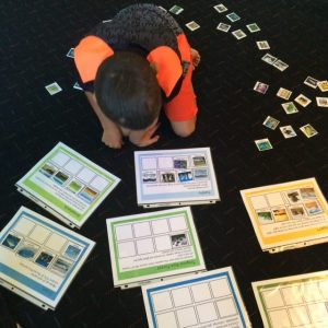 Sorting mats for sorting animals, plants, and other vocabulary by biome.