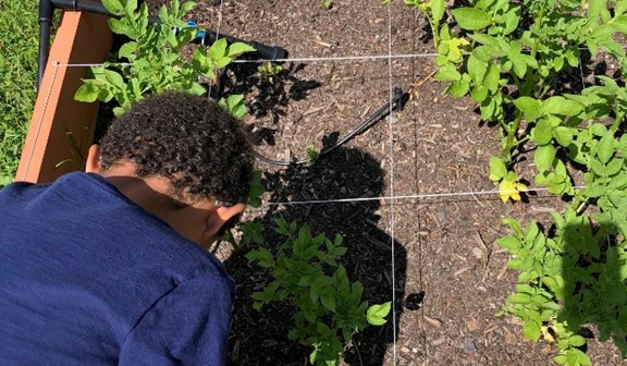 Boy working in garden
