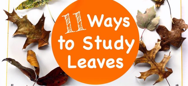 Cover for blog post 11 Ways to Study Leaves