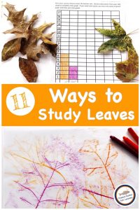 Pinnable blog cover for 11 Easy Ways to Study Leaves