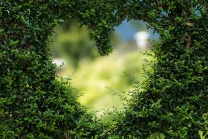 Greenery shaped into a heart.