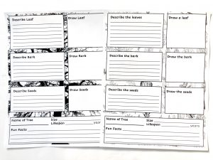 Two black and white printable notebooking pages with boxes to write and draw about leaves, bark, seeds, and more.