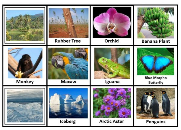 Photos of animals and plants for the rain forest and tundra biomes.