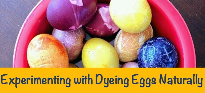 Cover for blog post Experimenting with Dyeing Eggs Naturally.
