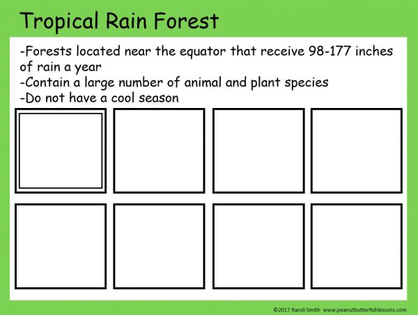 Sorting mat with 8 empty squares and description of a tropical rain forest.