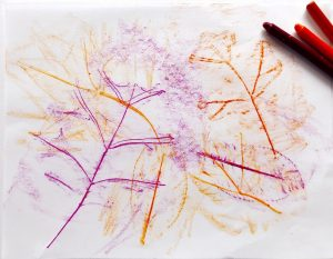 Leaf rubbings with crayons
