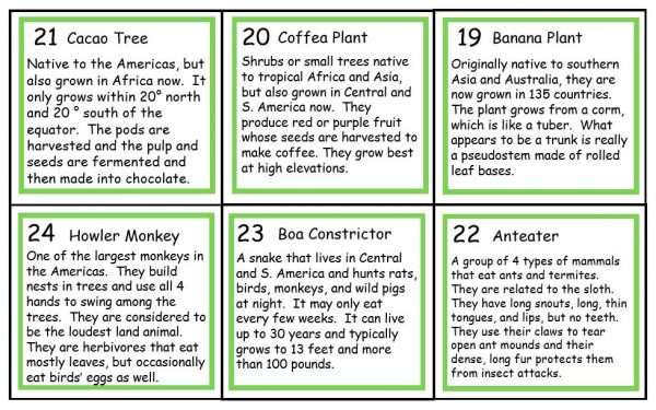 Back of sample of rainforest vocabulary cards