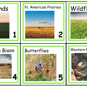 Grasslands Vocabulary Concept of the Day Cards
