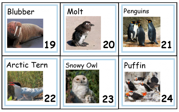 Six vocabulary cards with photos of tundra animals.