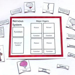 Human Body Systems Sorting Mats