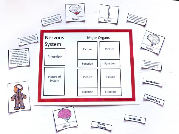 Nervous system sorting mat with matching cards.