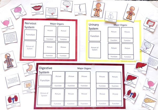 Three printed human body systems sorting mats with matching cards.